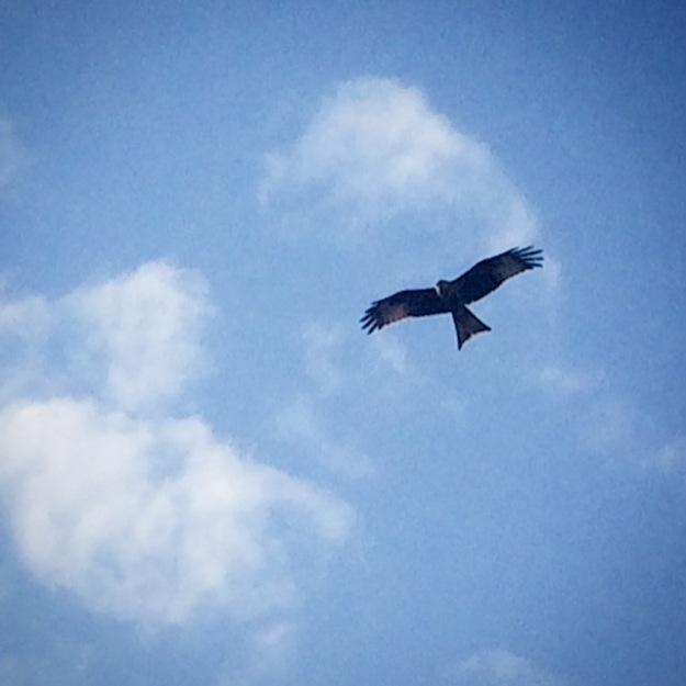 Red Kite Leeds