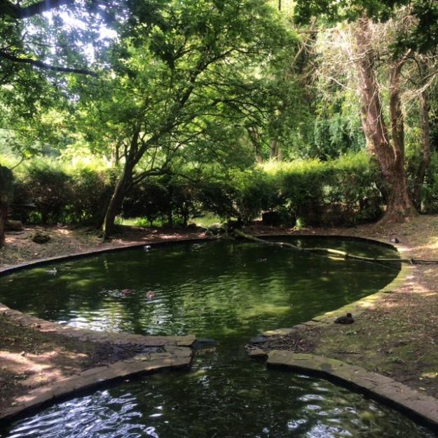 Lotherton Hall duck pond